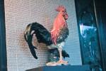 Patung Ayam Jago