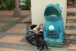 Kurang bersih.. Kucing mengais makanan di tempat sampah dekat kolam renang