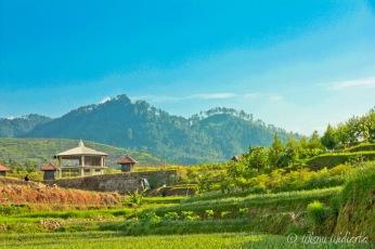 Green Scenery near Guci