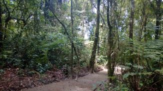 Path @ Gunung Putri