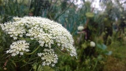 Bunga jalur Gunung Putri