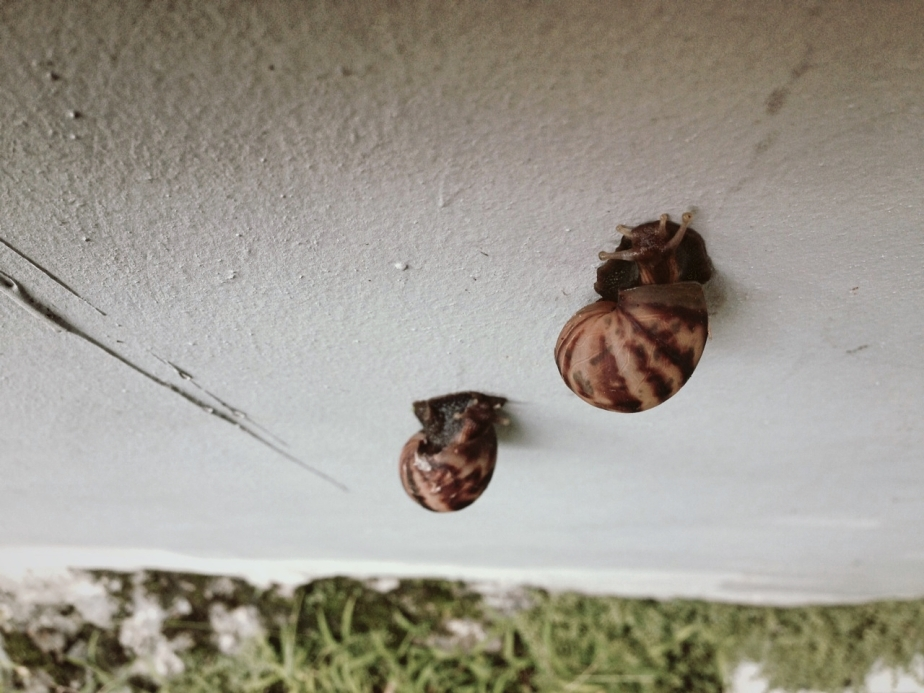 Phoneography Challenge, the Phone as Your Lens: Snails Race