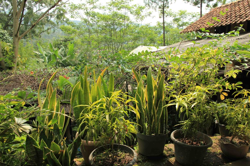 Camping di Ranca Upas - Ciwidey - Bandung (4/6)