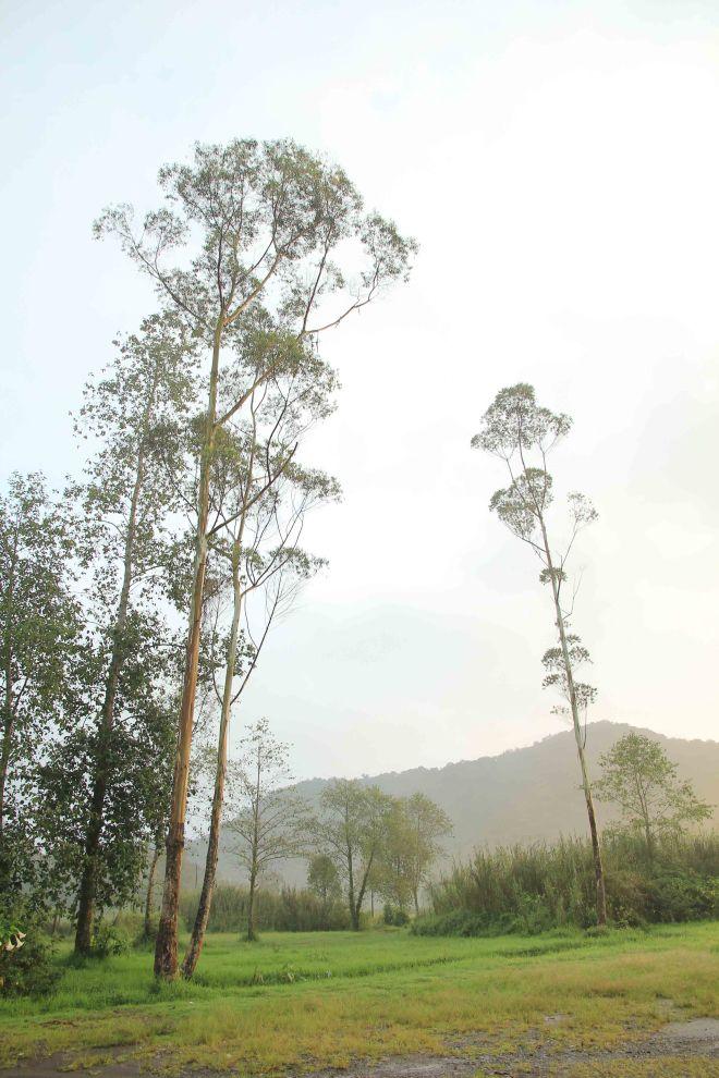 Pepohonan dan bukit