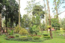 Taman di kolam renang
