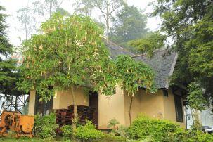 Pohon di samping kantor