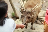 Memberi makan rusa