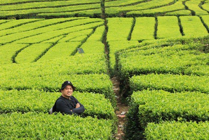 Aku dan teh yang hijau