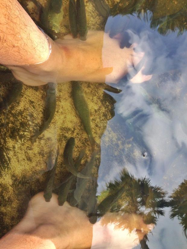 Terapi Ikan