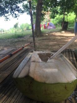Segarnya kelapa muda
