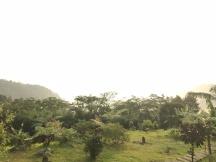 Pepohonan hijau